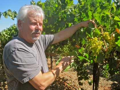 Jim Moore showing us his Lodi grown Vermentino