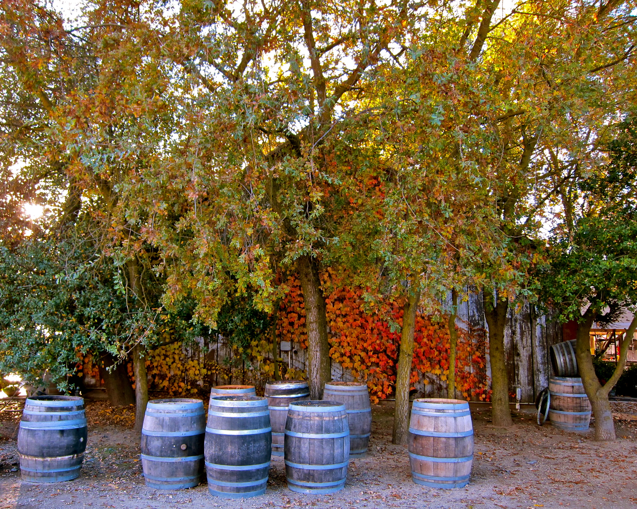 Lodi's November autumn splendor