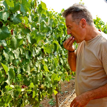 Markus Bokisch tastes 2012 Verdelho harvest in his Vista Luna Vineyard