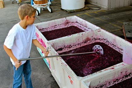 McCay Cellars' Matt McCay punches down Bechthold Vineyard Cinsaut (picked August 30), nearing the end of its native yeast fermentation