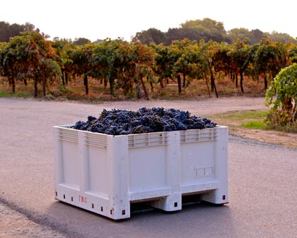 Kirschenmann Zinfandel ready to be loaded and sent to Turley