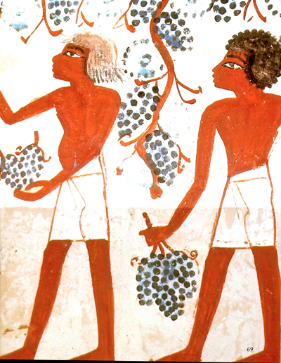Ancient Egyptian grape harvest