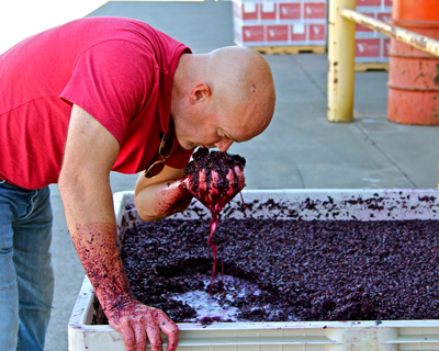 Michael McCay with native yeast fermented Zinfandel