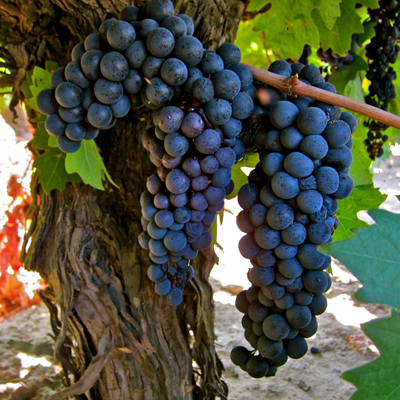 Soucie Vineyard Zinfandel