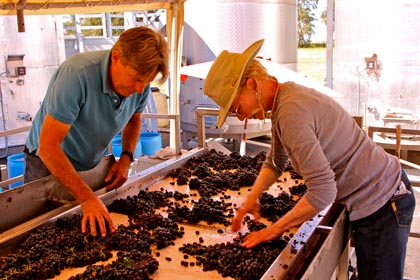 2013 Zinfandel harvest at Jessie's Grove Winery