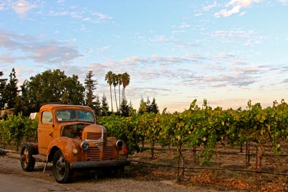 """This ol' truck"" in Harney Lane's vineyard"