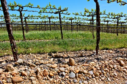 River bottom soil: source of Ironstone's Kautz Farms Petite Sirah