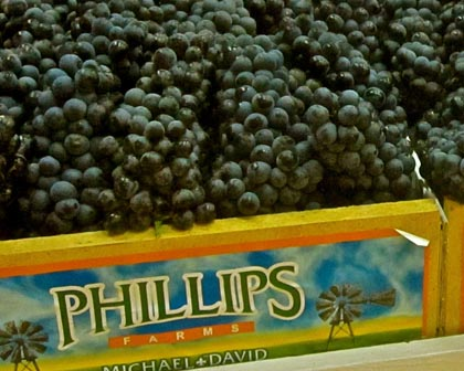 Phillips Farms Petite Sirah at Lodi Grape Festival
