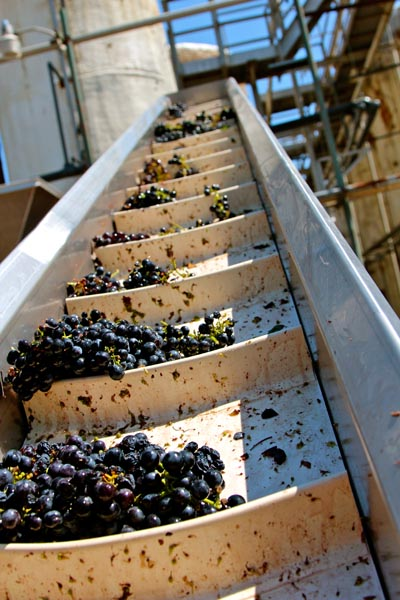 Maley Brothers' Wegat Vineyard Zinfandel coming in at the crusher