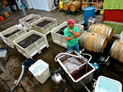 Mid-September: Harney Lane's Kyle Lerner, contemplating macro-bins of fermenting Zinfandel