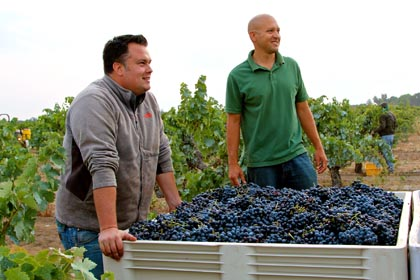 August 19: each year Lodi's oldest growth — Bechthold Vineyard, planted 1886 completely to Cinsaut grapes– is among the first red wine plantings to be picked; here, by Turley's Tegan Passalacqua (left) and Phillips Farms vineyard manager Emiliano Castanon