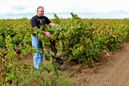 "Peirano's Lance Randolph: old school Lodi winegrower, suddenly ""hip"" among wine judges"