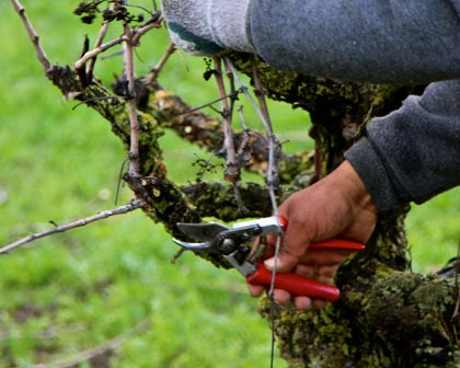 Gloves come off when pruning comes to detailing