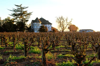 Setting February sun over Lodi old vines