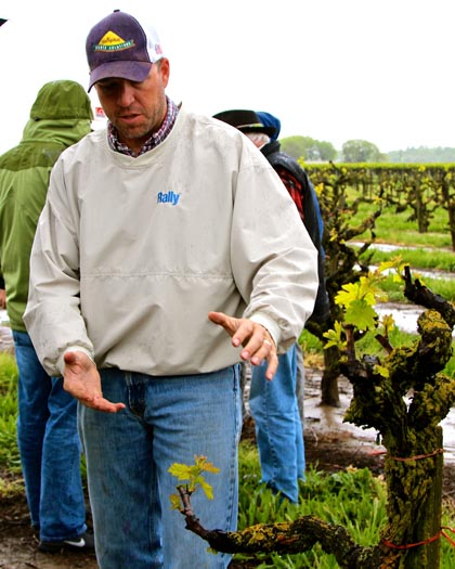 Mohr-Fry Ranches' Bruce Fry showing 113-year old vines in Marian's Vineyard