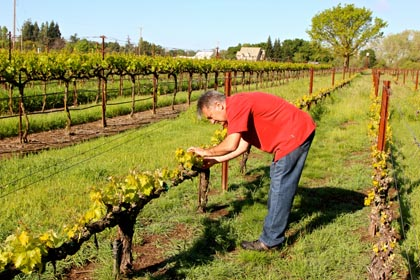 Markus Bokisch in his close-spacing Las Cerezas Vineyard