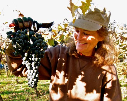 "Barbara Hucksteadt's rare Marzemino grape, producing Hux ""Dave's Aria"""