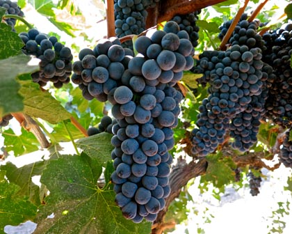 Phillips Farms Petite Sirah