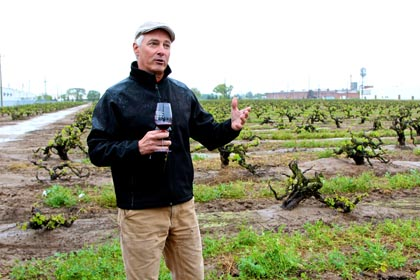 Macchia winemaker/owner Tim Holdener among tiny +100-year old Noma Ranch vines on Lodi's east side