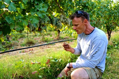 Borra winemaker Markus Niggli tasting Kerner grapes