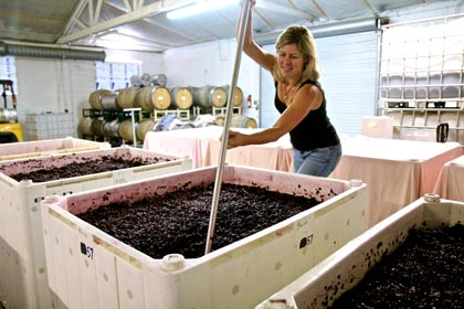 Alison Colarossi punching down her fermenting Stellina Zinfandel at Estate Crush