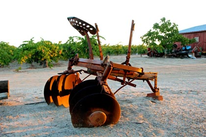 Retired discs in Manassero Vineyard