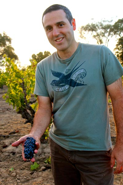 August 25: Jeff Perlegos with typically tiny Zinfandel cluster from his Stampede Vineyard