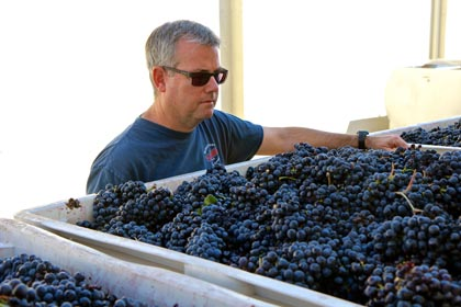 St. Amant's Stuart Spencer checking on his Marian's Vineyard Zinfandel