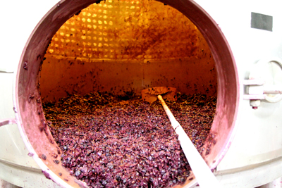 At m2 winery, grape skins of just-drained Zinfandel fermentor, headed for pressing