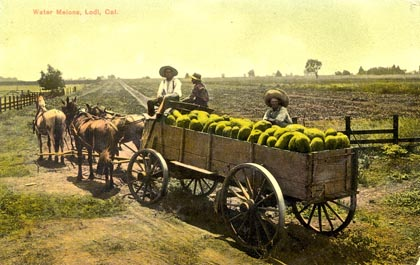 "19th century postcard from when San Joaquin Valley was the ""watermelon capitol of the world"")"