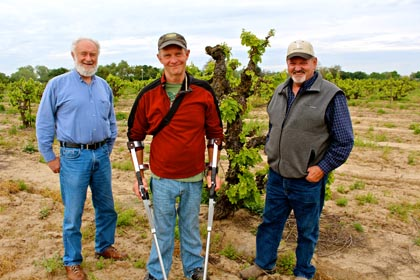 Four reasons why Lodi wines are so special: !ZaZin and REDS winemakers Ray Kaufmann and Patrick Campbell (left & center), Klinker Brick owner/grower Steve Felten, and ancient, gnarly 109-year old Rauser Vineyard Carignan vine