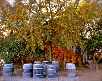 November colors at Jessie's Grove Winery