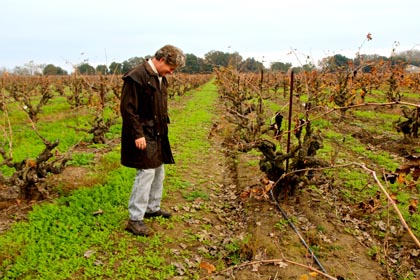 Visiting Sonoma winemaker Greg La Follette respectfully bows before 100-year old Lodi Zinfandel plant