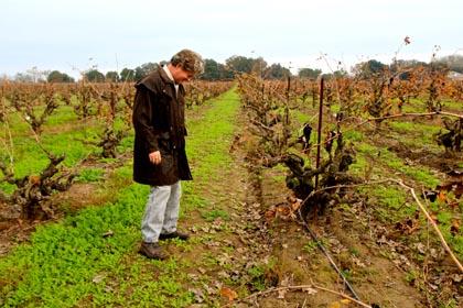 Visiting Sonoma winemaker Greg La Follette respectfully bows before 100-year old Lodi Zinfandel plant