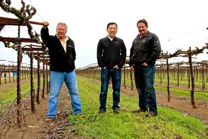 Mike Manna, Jason Mikami and Kian Tavakoli with split-canopy, close-spaced trellised Mikami Vineyards Zinfandel