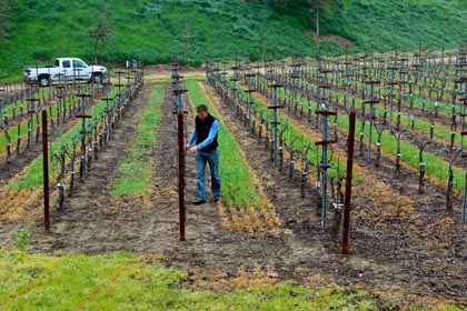 Borra Vineyards winemaker Markus Niggli in Gill Creek Ranch Vermentino planting