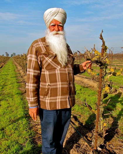 West side grower Amrik Dhaliwal