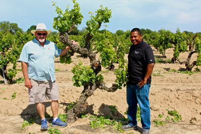 Klinker Brick's Steve Felten and Joseph Smith with towering, ancient Rauser Vineyard Carignan