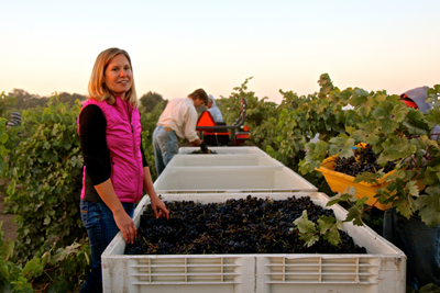 Jillian Johnson DeLeon with 2014 Bechthold Vineyard Cinsaut harvest
