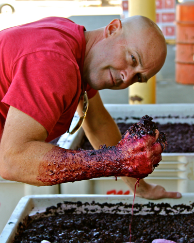 Lodi's Michael McCay at his favorite activity (crushing red wine grapes)