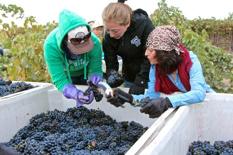 Lodi Winegrape Commission - Blog - Culinary yin and yang of