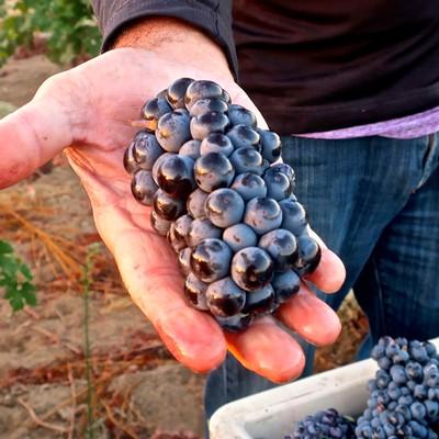 "Lodi Winegrape Commission - Blog - At ZAP's 2019 ""Flights"