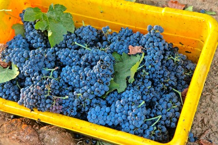 Lodi Winegrape Commission - Blog - How Viñedos Aurora Petite