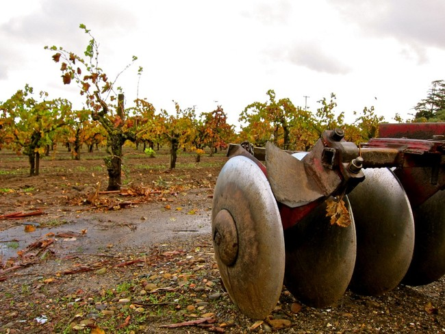 Discs and old vine Zinfandel in Phillips Farms' Bare Ranch